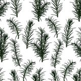 Seamless pattern with fir-tree branches. Vector illustration. Typography design elements for prints, cards, posters, products packaging, branding Stock Photo
