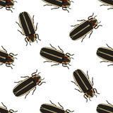 Seamless pattern with firefly beetle Lampyridae. photinus pyralis.  firefly .Vector Royalty Free Stock Photos