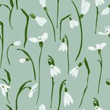 Vector seamless pattern with snowdrops. Seamless pattern with the first spring flowers with snowdrops. Vector illustration with graphic snowdrops Royalty Free Stock Photos