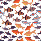 Seamless pattern fishes aquarium. Stock Photos