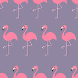 Seamless Pattern Flamingo Exotic tropical bird. Zoo animal collection. Cute cartoon character. Decoration element. Violet backgrou Royalty Free Stock Images