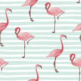 Seamless pattern with flamingo. Vector summer background royalty free stock images