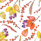 A seamless pattern with a floral ornament of the watercolor forest elements: red and yellow autumn leaves on the branches, berries Royalty Free Stock Photography