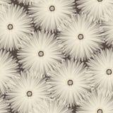 Seamless pattern. Floral stylish background Stock Photos
