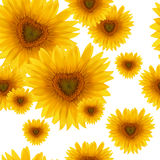 Seamless pattern flower sunflower. Heart-shaped  white background Stock Photography