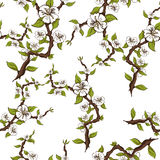 Seamless pattern of flowering branches of apple on a white background Royalty Free Stock Images