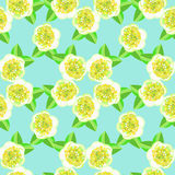 Seamless pattern with flowering tea bush Camellia Chinese. vecto Royalty Free Stock Images