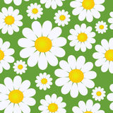Seamless pattern with flowers. Seamless pattern with camomile flowers Stock Image