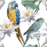 Seamless pattern with flowers and birds. Royalty Free Stock Image