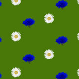 Seamless pattern with flowers chamomile Stock Image