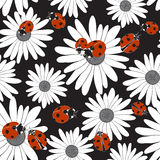 Seamless pattern with the flowers of chamomile and ladybirds. Stock Photography