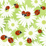 Seamless pattern with the flowers of chamomile and ladybirds. Su Stock Photo