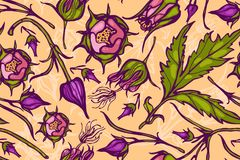 Seamless pattern with flowers. Geum Rivale. Rosaceae. Vector. Hand drawn. royalty free illustration