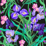 Seamless pattern with flowers. Iris. Lily. Vector. Hand drawn. Black background Royalty Free Stock Images