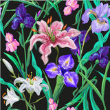 Seamless pattern with flowers. Iris. Lily. Vector. Hand drawn. Black background Stock Image