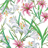 Seamless pattern with flowers. Iris. Lily. Vector. Hand drawn. Royalty Free Stock Image