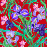 Seamless pattern with flowers. Iris. Lily. Vector. Hand drawn. Red background Stock Photography