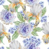 Seamless pattern with flowers. Iris. Peony. Watercolor illustration. Royalty Free Stock Image