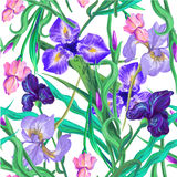 Seamless pattern with flowers. Iris. Vector. Hand drawn. Stock Photography