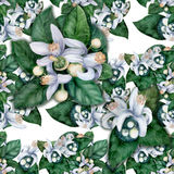 Seamless pattern. Flowers and leaves of orange tree fruit. Stock Photos
