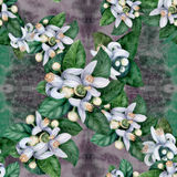 Seamless pattern. Flowers and leaves of orange tree fruit. Royalty Free Stock Photography