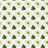 Seamless pattern of flowers and leaves Royalty Free Stock Photography