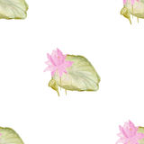 Seamless pattern with flowers lotus Vector Illustration