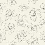Seamless pattern with flowers narcissus. Stock Photos