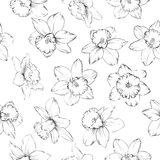 Seamless pattern with flowers narcissus. Royalty Free Stock Photo