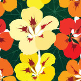 Seamless pattern with flowers nasturtium Stock Photo