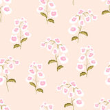 Seamless pattern flowers of nemesia Royalty Free Stock Image