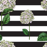 Seamless pattern with flowers of phlox on black and white striped background. Vector illustration. Seamless pattern with flowers of phlox on black and white Stock Photography