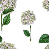 Seamless pattern with flowers of phlox isolated on white background. Vector illustration. Seamless pattern with flowers of phlox isolated on white background Royalty Free Stock Photo