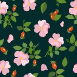 Seamless pattern with flowers and rose hips. Vector illustration. Stock Photography