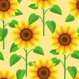 Seamless pattern with flowers sunflowers Royalty Free Stock Photo
