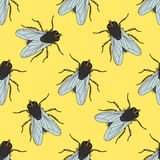 Seamless pattern with fly. Musca domestica . hand-drawn . fly. Vector Stock Photos