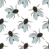 Seamless pattern with fly. Musca domestica . hand-drawn . fly. Vector Stock Image
