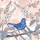 Seamless pattern with forest bird on branch Royalty Free Stock Photos