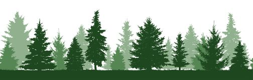 Seamless pattern of forest fir trees silhouette. Coniferous green spruce. Vector royalty free illustration