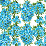 Seamless pattern of forget-me-not Stock Images