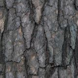 Seamless pattern of old tree barque. Seamless pattern with fragment of broken tree barque for design or background royalty free stock photos
