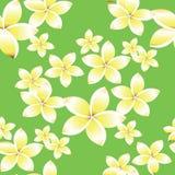Seamless pattern with frangipani flowers Royalty Free Stock Photos