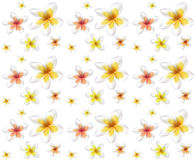 Seamless pattern from Frangipani flowers Royalty Free Stock Photos