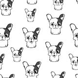 Seamless pattern with french bulldog puppies. Monochrome vector Royalty Free Stock Image