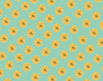 Seamless pattern of fresh yellow daisy flower on green Royalty Free Stock Image