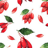 Seamless pattern with fruits of dogwood Stock Image