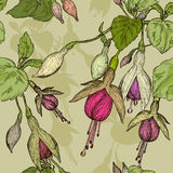 Seamless pattern with fuchsia flower Royalty Free Stock Photo