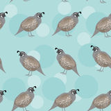 Seamless pattern with funny cute quail bird on a Royalty Free Stock Images