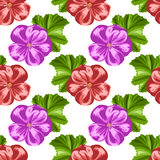 Seamless pattern with geraniums Royalty Free Stock Image