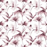 Seamless pattern with Gerber and Cosmea flowers. Watercolor illustration Royalty Free Stock Images